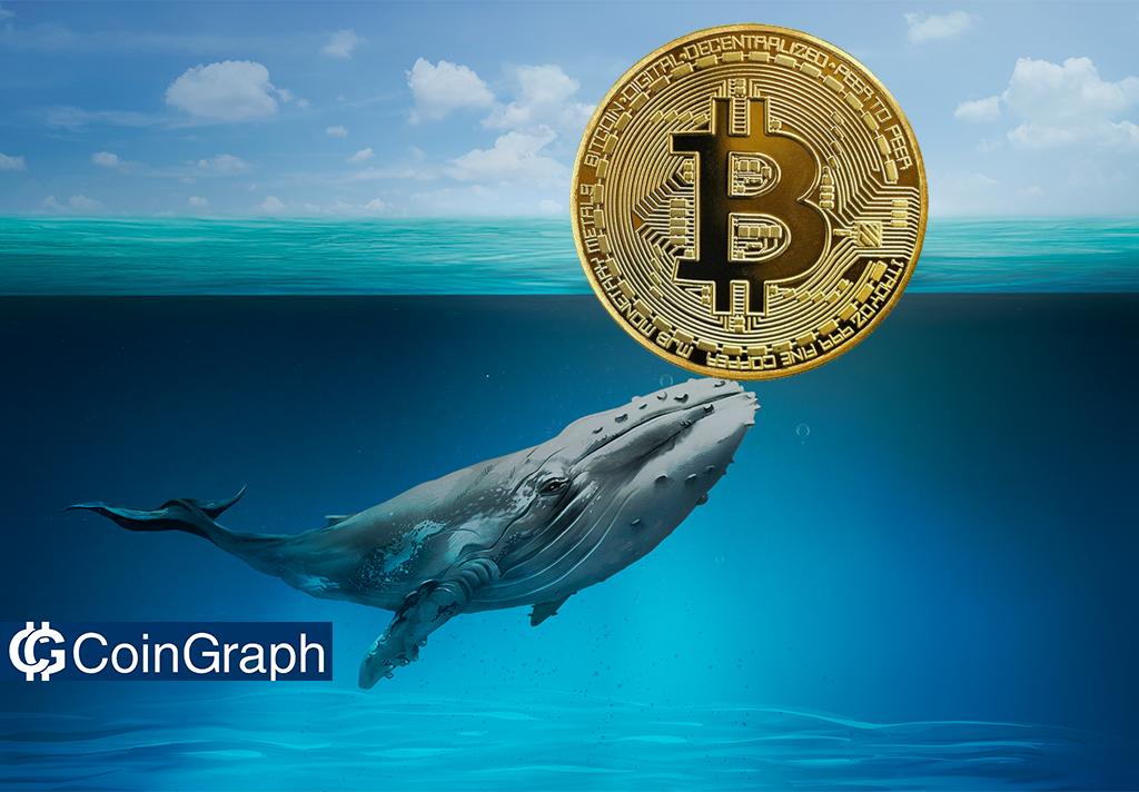 تحلیلگر Willy Woo: سقوط اخیر بیتکوین بخاطر فروش نهنگها اتفاق نیفتاد!